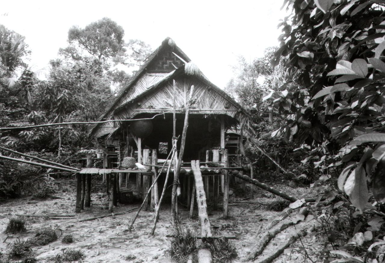 indonesia-jungle
